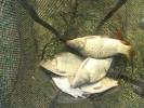 2011-10-09_11-03-55-1754_orig
