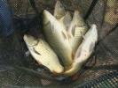 2011-10-09_12-28-36-1726_orig