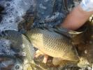 2011-06-24_08-23-07-1071_orig
