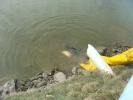 2012-03-14_13-09-12-1925_orig