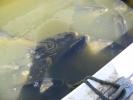 2012-04-27_12-44-38-2283_orig