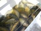 2012-04-27_12-48-14-2271_orig