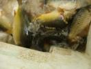 2012-06-22_09-07-45-2770_orig
