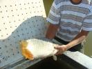 2012-08-31_09-25-38-3115_orig