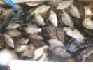 2012-11-26_17-32-57-3345_orig